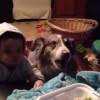 【犬】ご飯が欲しすぎる。犬のくせに思わず「ママ」と言ってしまう。