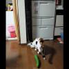 【猫とキュウリ】猫ってデカいキュウリ見せるとヤバいんだぜ!!