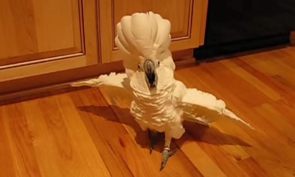【トリ】「ふぁーっふぁっふぁっ!!ジンルイよ、我こそがトリである!」荒ぶりまくるトリが発見される。