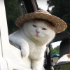 【かご猫】かご猫のシロ氏、農家のおっさんになるの巻き