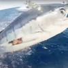 【カジキマグロ】魚釣りしてたら、カジキマグロがミサイルだったんだぜ!!