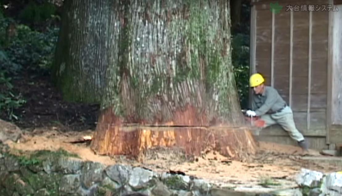 その樹齢400年・・・御神木とも言える巨木をぶった切る