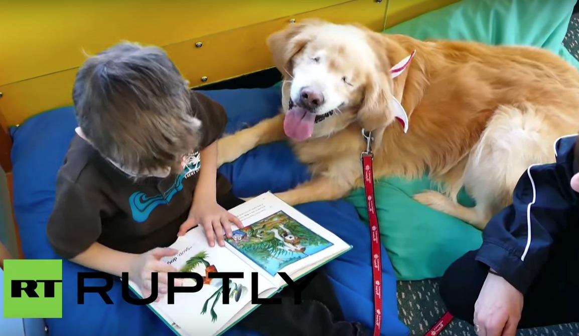 光を知らない盲目の犬・・・セラピー犬になって、子供たちの光になったよ