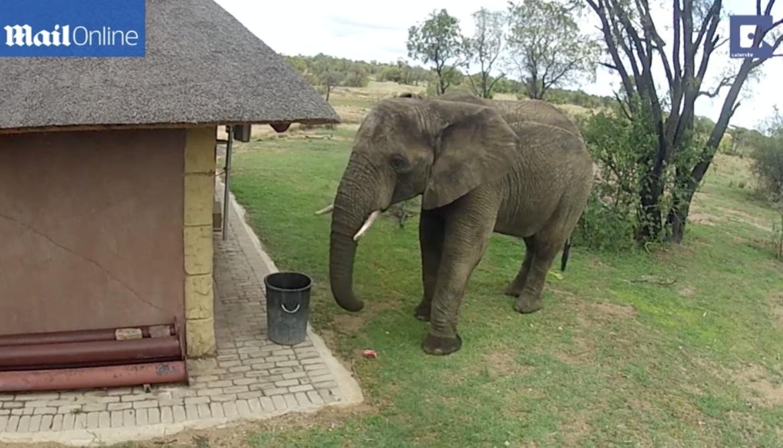 ゾウ氏「ポイ捨て、いけませんよ」・・・空き缶を拾ってゴミ箱に入れるゾウがいる