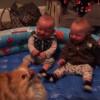 なぜかポメラニアンの動きに大爆笑する双子の赤ちゃん