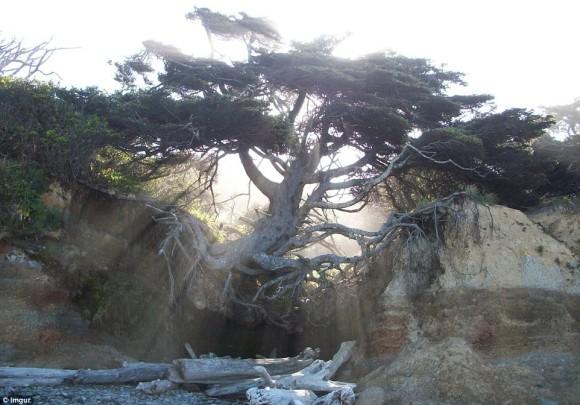 樹木氏「やべ、土ねぇし。でも、まぁいっか。」・・・大地に生える時代は終わった。宙に浮く樹木がいる3