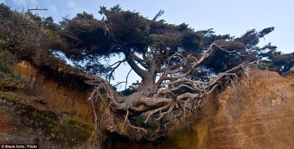 樹木氏「やべ、土ねぇし。でも、まぁいっか。」・・・大地に生える時代は終わった。宙に浮く樹木がいる2