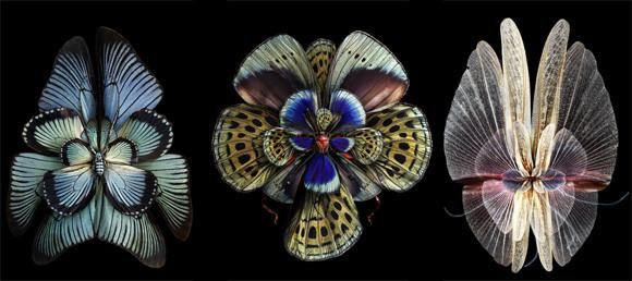 昆虫の仲間たちが花になったよ