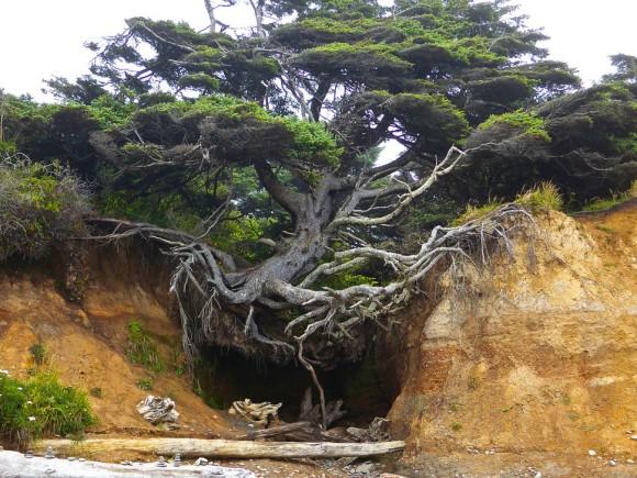 樹木氏「やべ、土ねぇし。でも、まぁいっか。」・・・大地に生える時代は終わった。宙に浮く樹木がいる1
