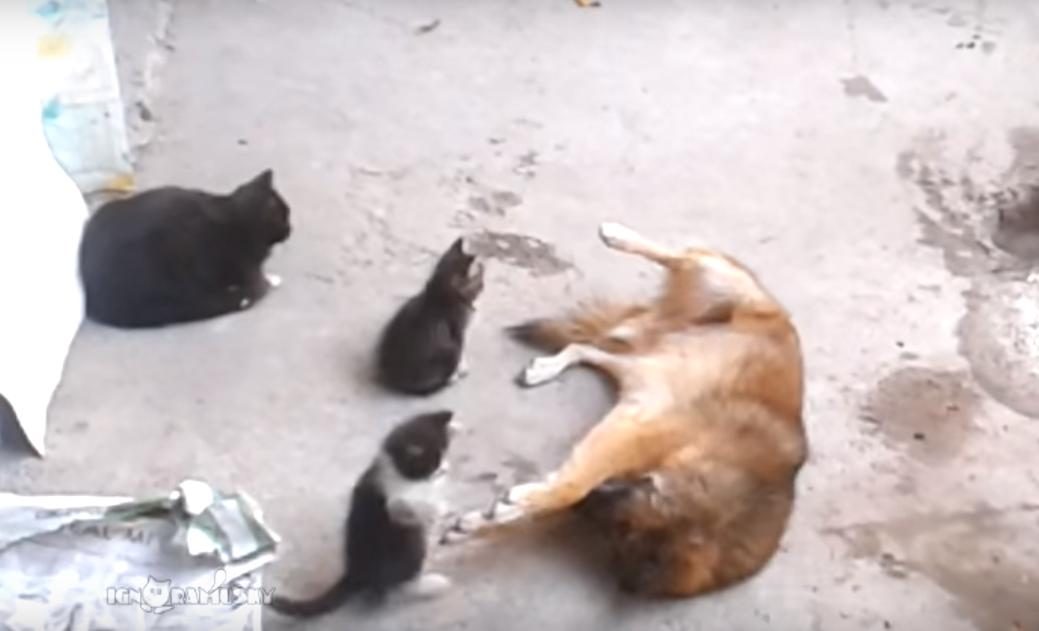 猫のおかあさん「赤ちゃんが産まれたから、見せにきたよ!」・・・仲良しの犬に、新しい仲間のご報告