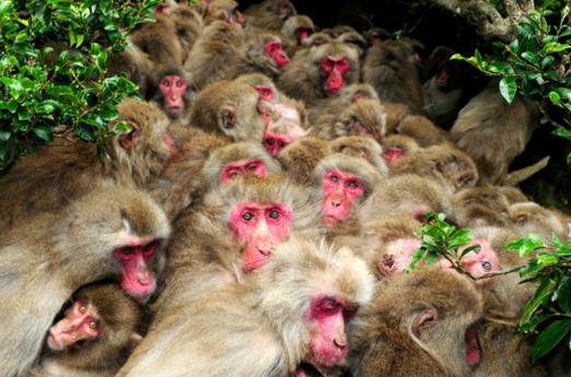 猿団子の登場。