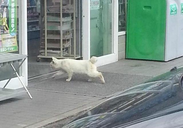 猫氏「ははぁ〜ん、ジンルイめ!、ワシに内緒でここで暖まってるわけか!」・・・ぎゃ、ぎゃぴぃ〜!!、入店拒否なネコがいる。
