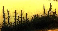 樹木が真っ黒に焼ける「山火事」の現場・・・と思いきや?ははぁんかかったな!これはなんぞや??