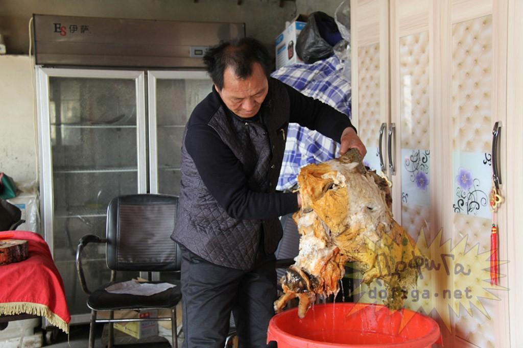 【太歳】中国で発見された伝説の不老不死の食材が「腐敗した未確認生物の死骸」にしか見えない
