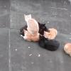 よっこらしょっと・・・猫氏、猫氏に乗る