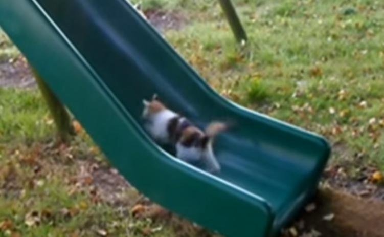 子猫と滑り台・・・あっ、あっっ!!のぼれないにゃああああっ!!