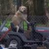 犬氏「アメリカはよぉ、竜巻が度々くるのよ〜、ワイはどうしたらいいンゴ」・・・途方にくれる犬氏の巻。
