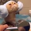 至福な表情でシャワーをしてもらう猫が激烈にもえキュン