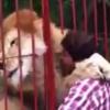ライオン氏「安心してください。食べてませんよっ!!」