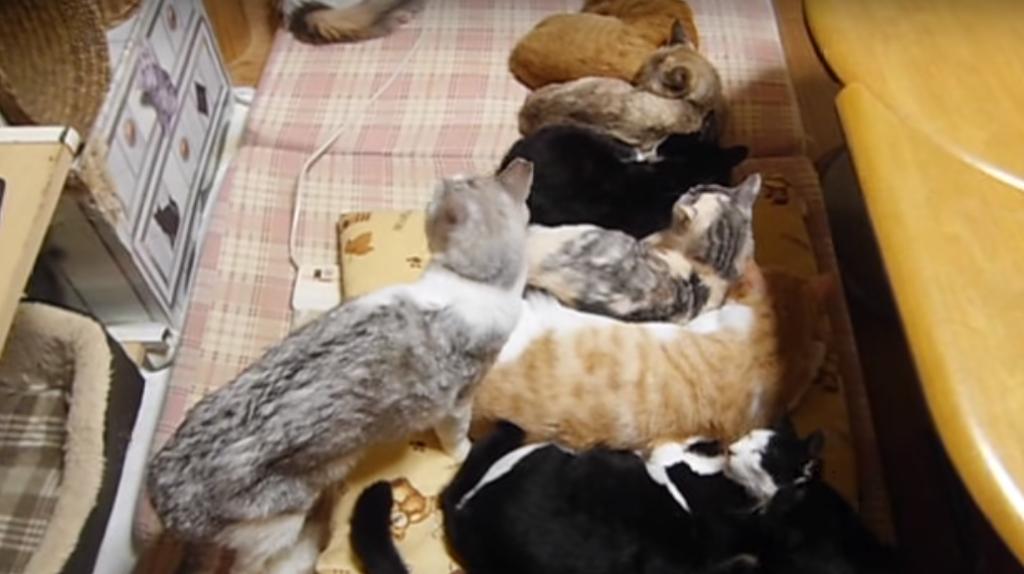 おうおうっ!!割り込むのか~??・・・割り込みまくるのは猫も人間も同じの巻