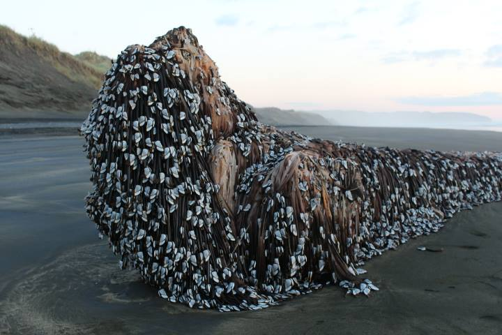 ニュージーランドの巨大生物群