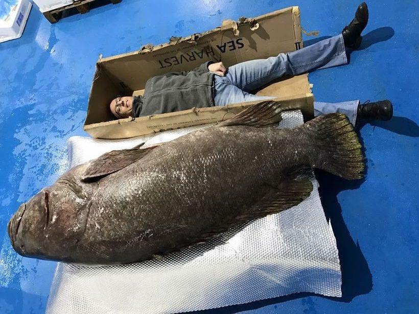 ワイ将「こんにちは、ワイはハタという魚です。魚市場で死んでいるんですが、クソほどデカいみたいなんですよ。」