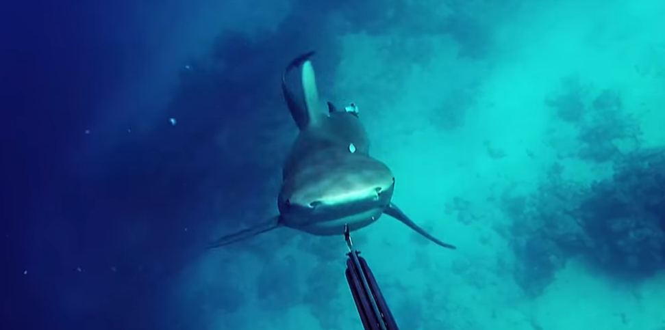 デカい人食いサメに襲われるダイバー。その視点から見る恐怖映像が三途の川レベル。