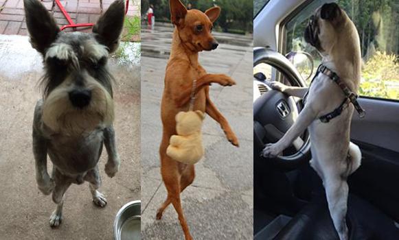 犬氏「いや、今回は犬なんですけど、前回は人だったんですよ、マジですって」・・・二足歩行、犬氏の巻