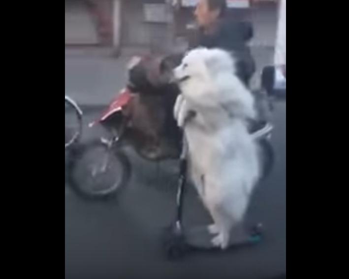 犬 電動キックボード