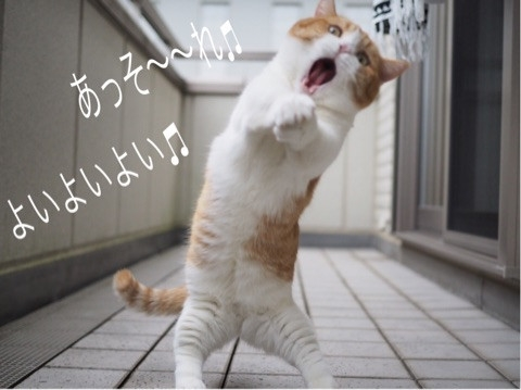 猫 きなこ