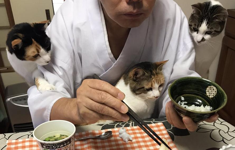 住職 猫 食事