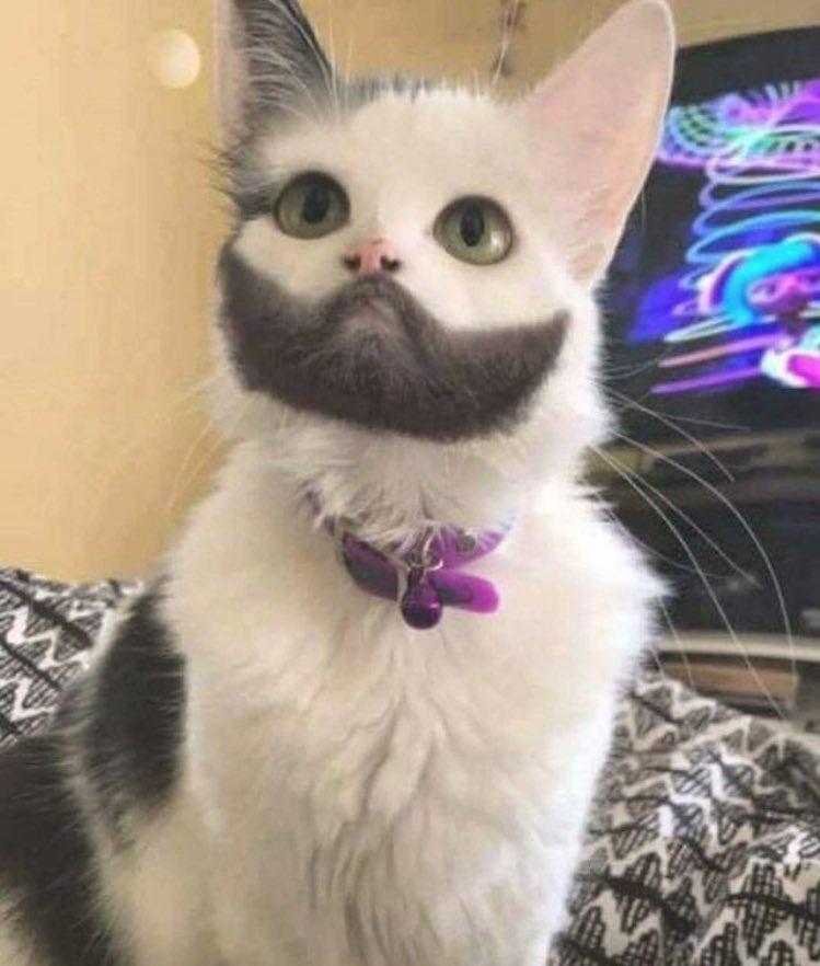 山田孝之 猫