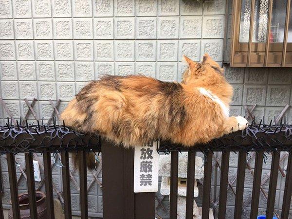 猫 猫よけ 効かない