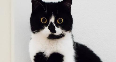 猫 ハートマーク