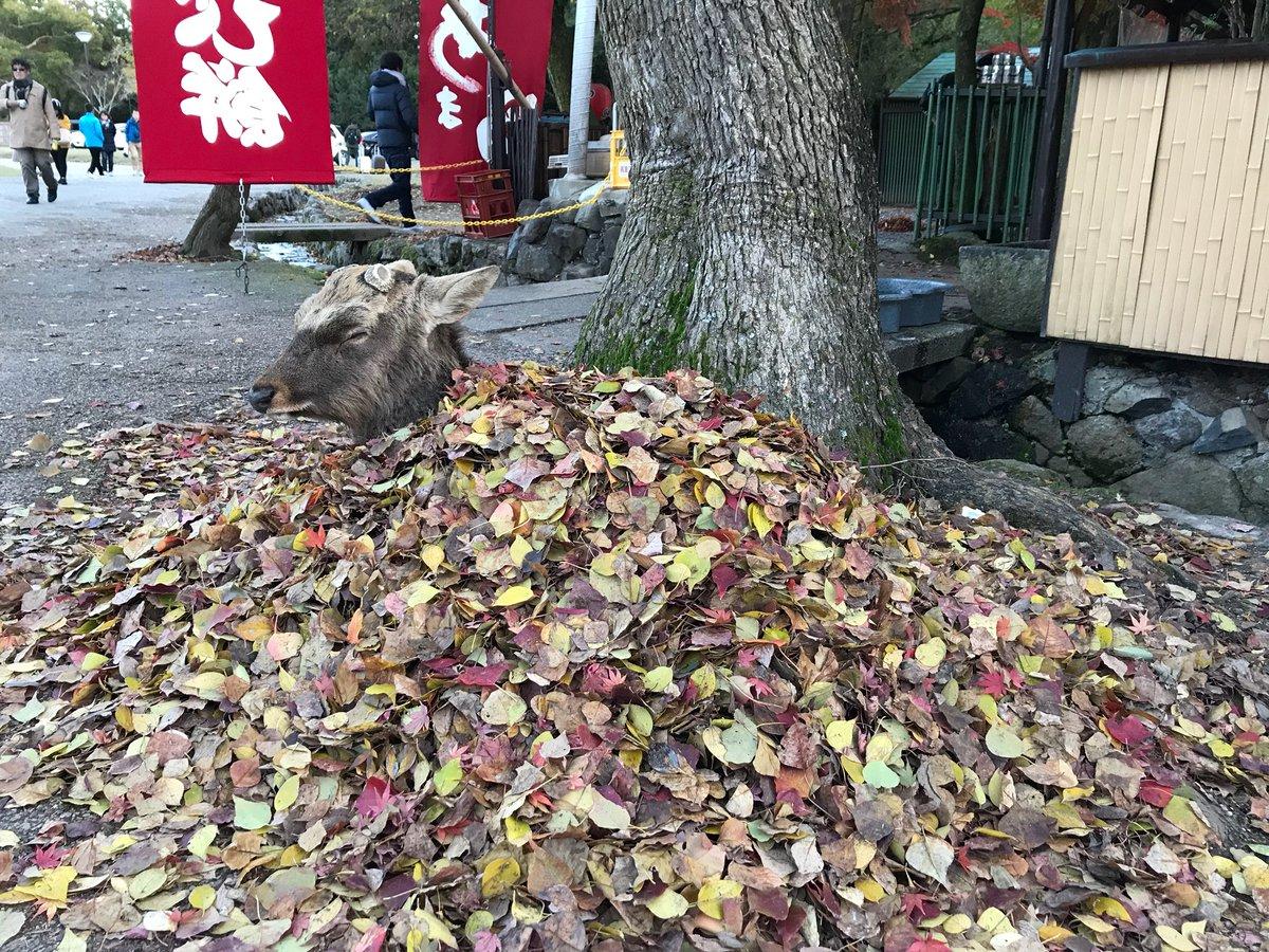奈良 鹿 布団 落ち葉