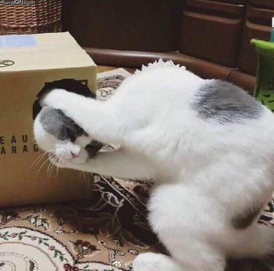 猫 イリュージョン