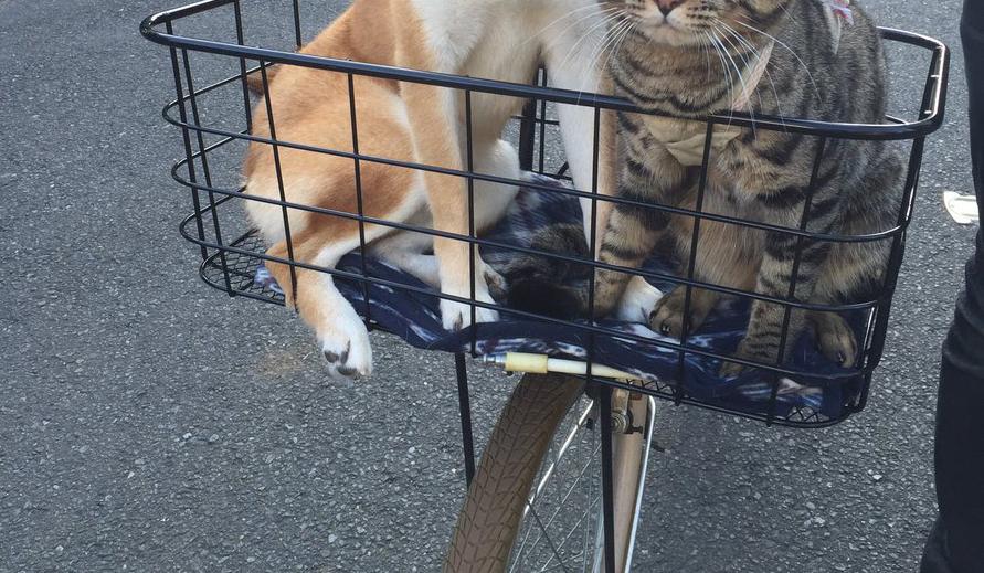 犬 猫 散歩 病院