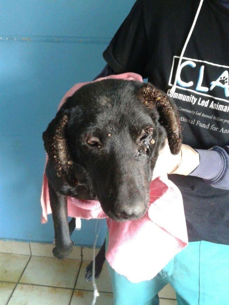 南アフリカ 感染症 犬 回復
