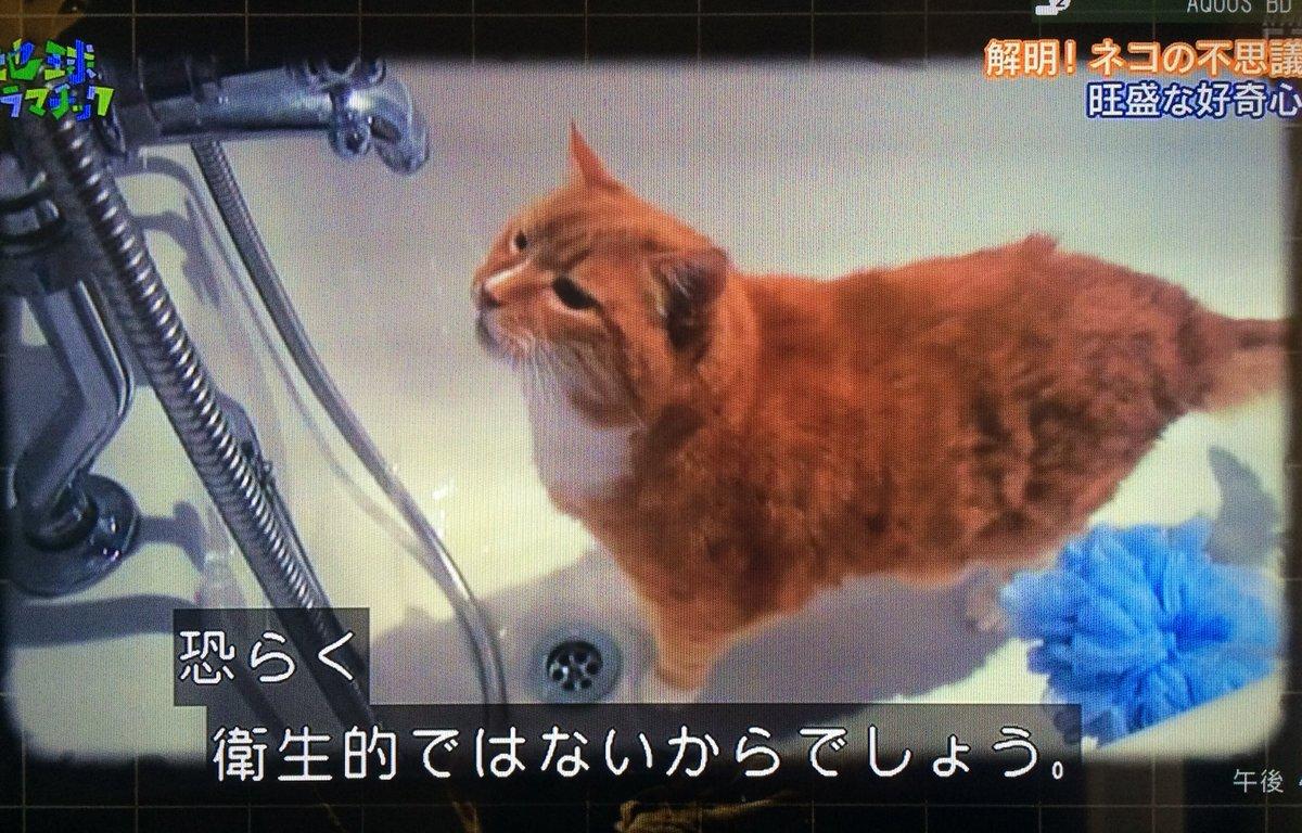 猫 水飲み